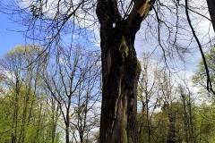 Park-Krajobrazowy-Cysterskie-Kompozycje-Krajobrazowe-Rud-Wielkich-7