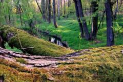 W-pobliżu-Polany-Kanetowiec-Przegędza