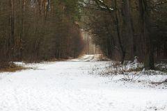 Kuznia-w-Siodelku-Spacer-po-lesie-1