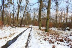 Kuznia-w-Siodelku-Spacer-po-lesie-11