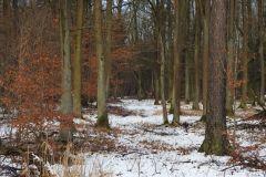 Kuznia-w-Siodelku-Spacer-po-lesie-12