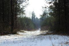 Kuznia-w-Siodelku-Spacer-po-lesie-2