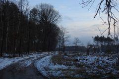 Kuznia-w-Siodelku-Spacer-po-lesie-3