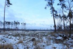 Kuznia-w-Siodelku-Spacer-po-lesie-5
