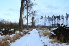 Kuznia-w-Siodelku-Spacer-po-lesie-6