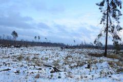 Kuznia-w-Siodelku-Spacer-po-lesie-7