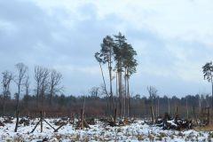 Kuznia-w-Siodelku-Spacer-po-lesie-8