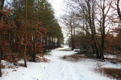 Kuznia-w-Siodelku-Spacer-po-lesie-9