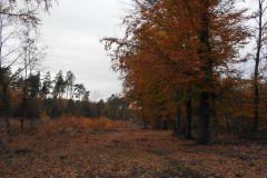 Kuznia-w-siodelku-Las-jesienia-1