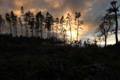 Kuznia-w-siodelku-Las-jesienia-10