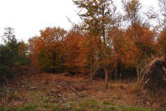 Kuznia-w-siodelku-Las-jesienia-11