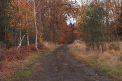 Kuznia-w-siodelku-Las-jesienia-13