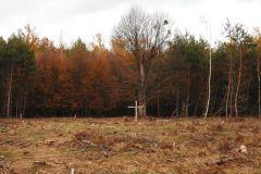 Kuznia-w-siodelku-Las-jesienia-14