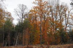 Kuznia-w-siodelku-Las-jesienia-15