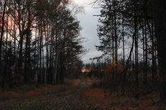 Kuznia-w-siodelku-Las-jesienia-18