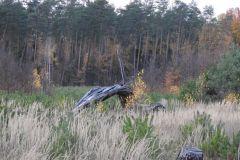 Kuznia-w-siodelku-Las-jesienia-4