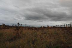 Kuznia-w-siodelku-Las-jesienia-6