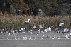 Kuznia-w-Siodelku-Rezerwat-Lezczok-Listopad-12