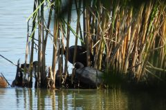 Kuznia-w-Siodelku-Rezerwat-Lezczok-Wrzesien-23