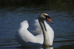 Kuznia-w-Siodelku-Rezerwat-Lezczok-Wrzesien-31