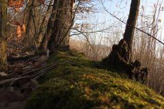 Kuznia-w-siodelku-Rezerwat-Lezczok-6