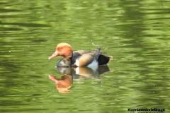 Kuznia-w-siodelku-Rezerwat-przyrody-Lezczok-Czerwiec-18