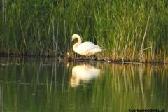 Kuznia-w-siodelku-Rezerwat-przyrody-Lezczok-Czerwiec-2