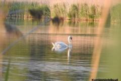 Kuznia-w-siodelku-Rezerwat-przyrody-Lezczok-Czerwiec-3