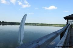 Kuznia-w-siodelku-Rezerwat-przyrody-Lezczok-Czerwiec-34