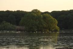 Kuznia-w-siodelku-Rezerwat-przyrody-Lezczok-Czerwiec-6