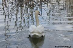Kuznia-w-siodelku-Rezerwat-Lezczok-Kwiecien-14