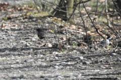 Kuznia-w-siodelku-Rezerwat-Lezczok-Kwiecien-22