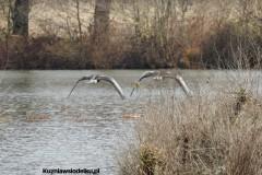 Kuznia-w-siodelku-Rezerwat-Lezczok-Kwiecien-25