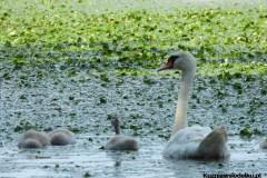 Kuznia-w-siodelku-Rezerwat-Przyrody-Lezczok-Lipiec-16