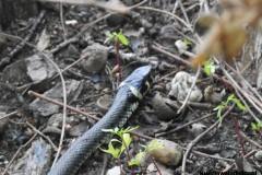 Kuznia-w-siodelku-Rezerwat-Przyrody-Lezczok-Lipiec-26