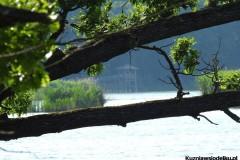 Kuznia-w-siodelku-Rezerwat-Przyrody-Lezczok-Lipiec-29