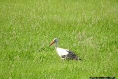 Kuznia-w-siodelku-Rezerwat-Przyrody-Lezczok-Lipiec-30