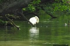 Kuznia-w-siodelku-Rezerwat-Przyrody-Lezczok-Lipiec-4