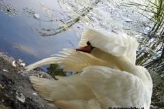 Kuznia-w-siodelku-Rezerwat-Przyrody-Lezczok-Lipiec-8