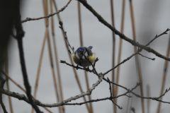 Kuznia-w-siodelku-Rezerwat-przyrody-Lezczok-Luty-11