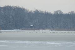 Kuznia-w-siodelku-Rezerwat-przyrody-Lezczok-Luty-13