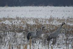 Kuznia-w-siodelku-Rezerwat-przyrody-Lezczok-Luty-3