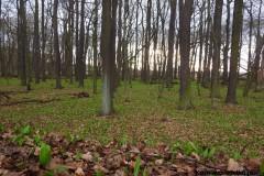 Kuznia-w-Siodelku-Rezerwat-Lezczok-Marzec-12