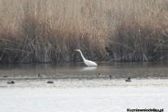 Kuznia-w-Siodelku-Rezerwat-Lezczok-Marzec-18