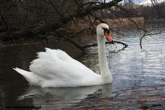 Kuznia-w-Siodelku-Rezerwat-Lezczok-Marzec-22