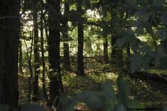 Kuznia-w-Siodelku-Rezerwat-Lezczok-Sierpien-10