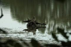 Kuznia-w-siodelku-Rezerwat-Lezczok-Wrzesien-11
