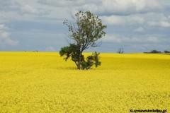 Kuznia-w-Siodelku-Trasa-Rowerowa-Opole-Zbiornik-Malina-Opole-1