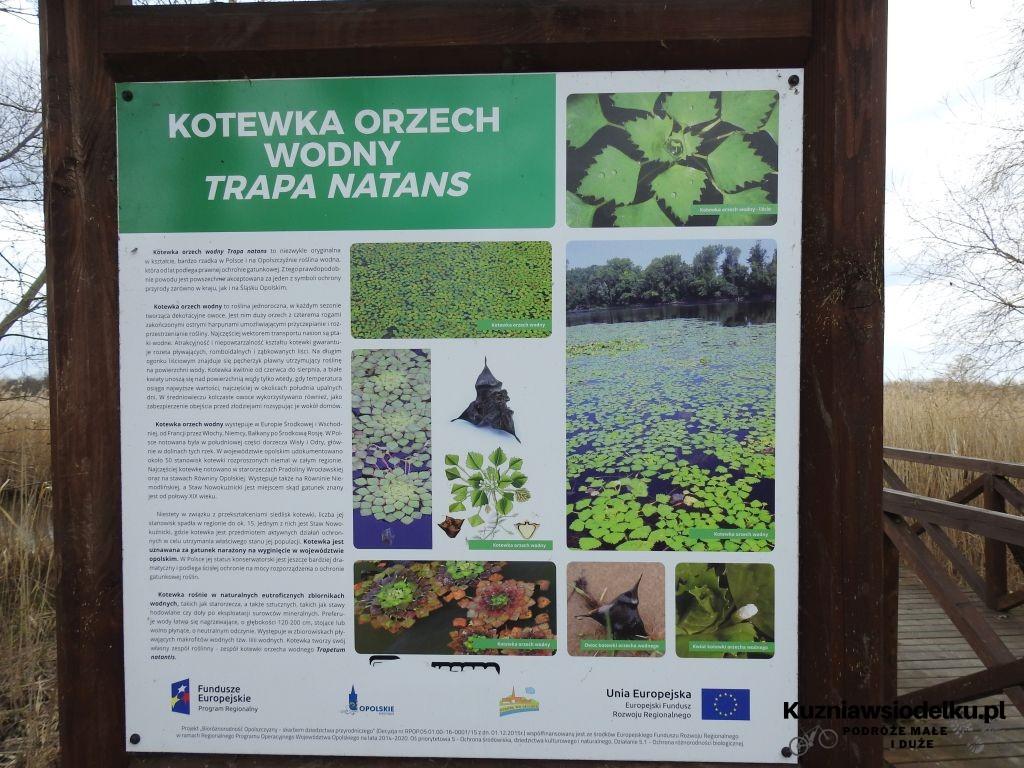 Kuznia-w-siodelku-Rezerwat-Przyrody-Staw-Nowokuznicki-10