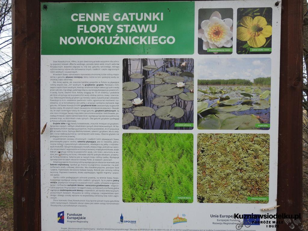 Kuznia-w-siodelku-Rezerwat-Przyrody-Staw-Nowokuznicki-12